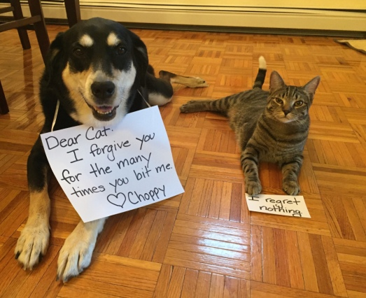 Pardon Dog and Cat