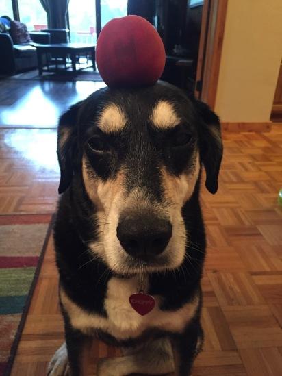 Peach Dog