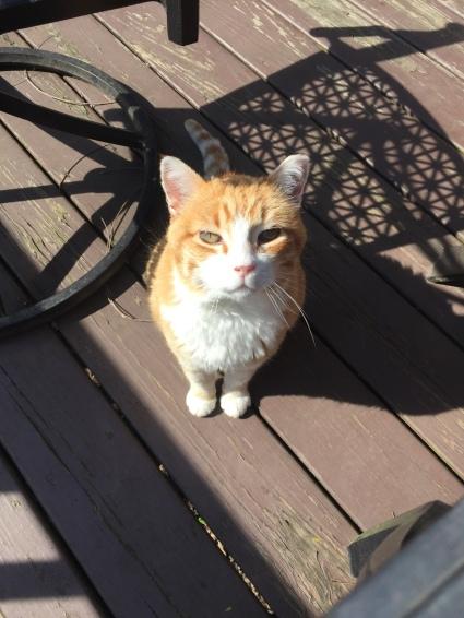Peach the Cat