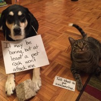 Howlidays: Pet Rock Day
