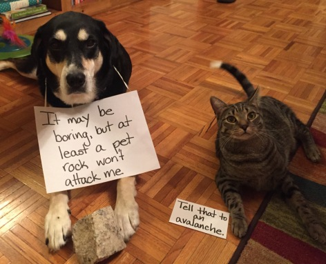 Pet Rock Cat and Dog