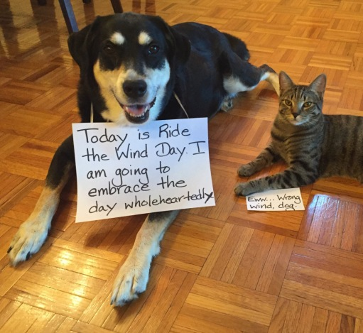 Ride the Wind Dog and Cat