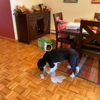 Here's Schooner: Misbehaving Dog