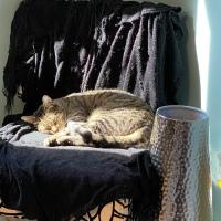 Midnight Mutts: Sunny Schooner
