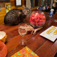 Midnight Mutts: Cat at the Bar