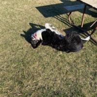 Dog Walk Challenge: Days 1,769 to 1,775